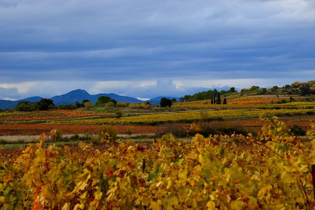 Les Vignes vers St Bauzille-de-la-Sylve, occitanie