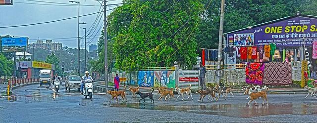 Street Doge Parade DSC_5573