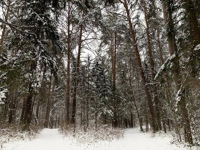 Зима в лесу. Россия 2019. Winter in the forest. Russia 2019.