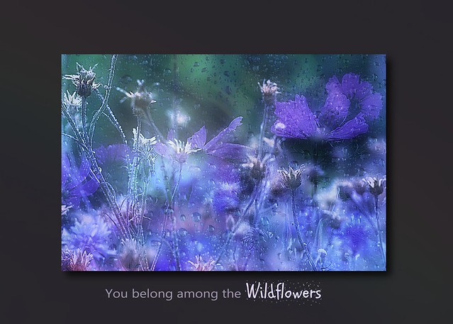 You belong among the wildflowers . . .