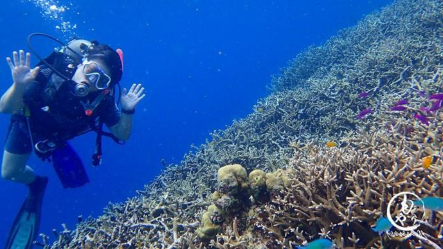 浅瀬は珊瑚が美しいリーフでした♪