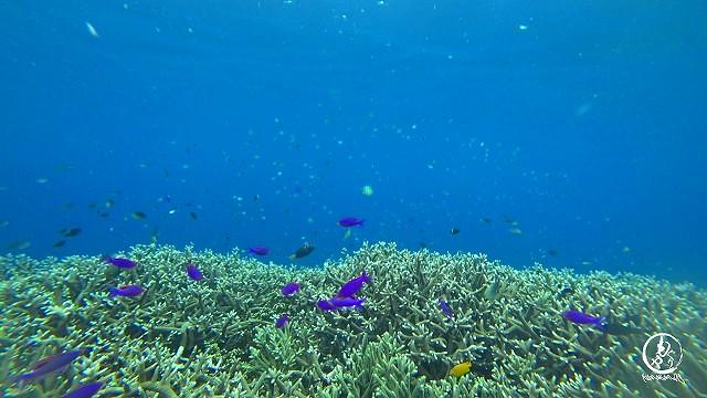 浅場のサンゴが本当に美しかった