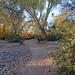 Path, Verde River, Tonto National Forest, AZ