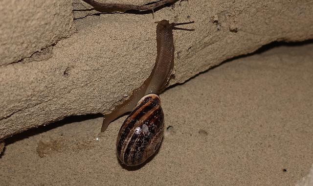 Snail (Macro)