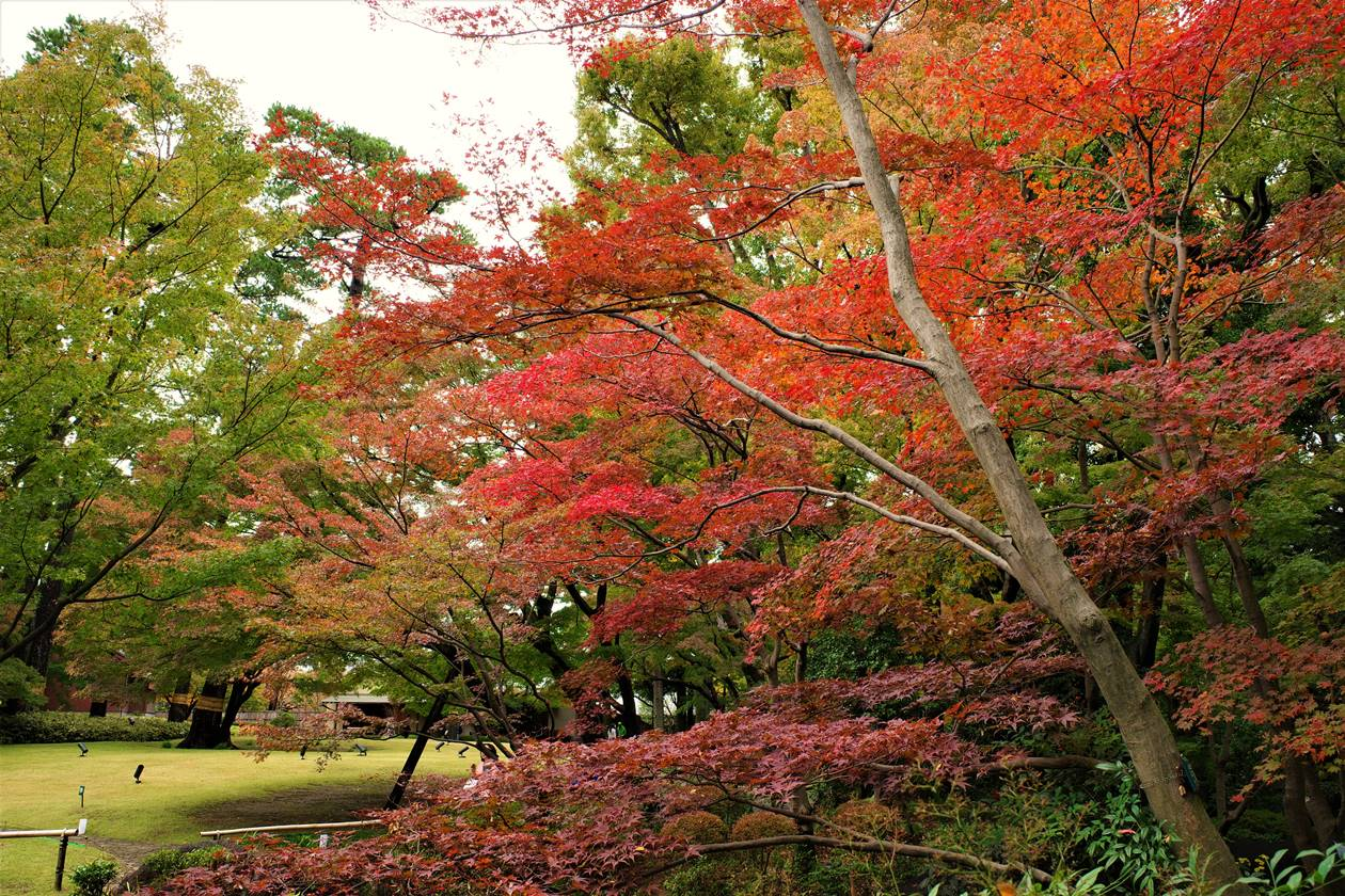 大田黒公園の紅葉