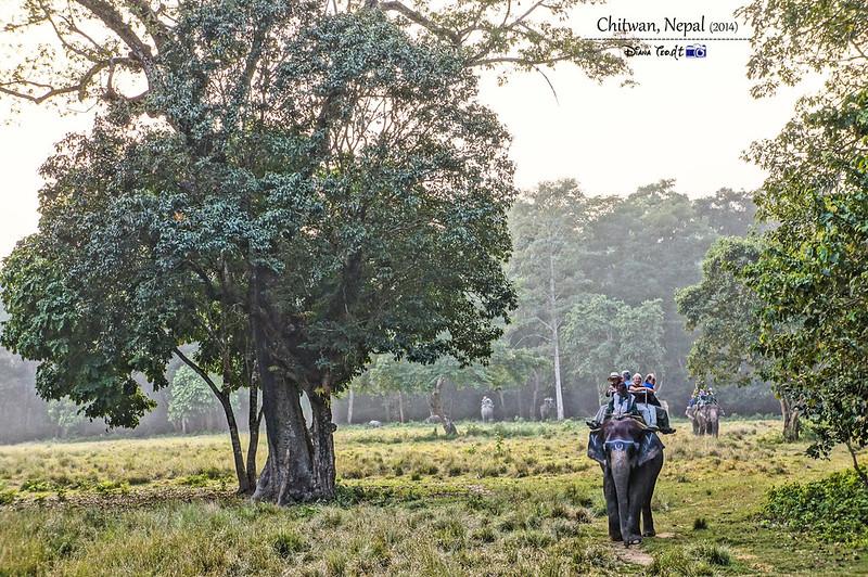 2014 Nepal Chitwan Elephant Ride 4