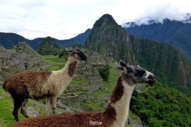 °Machu Picchu 3