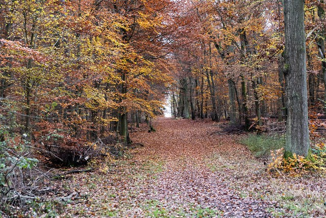 Durch den Herbstwald / Through the autumn forest