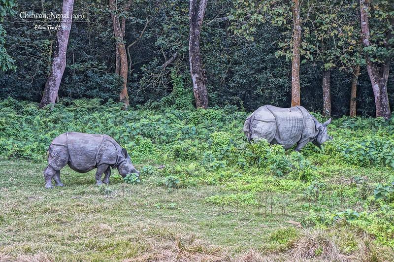 2014 Nepal Chitwan Elephant Ride 3