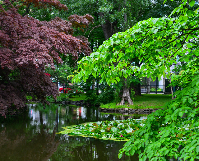 Green leaves and trees at summer
