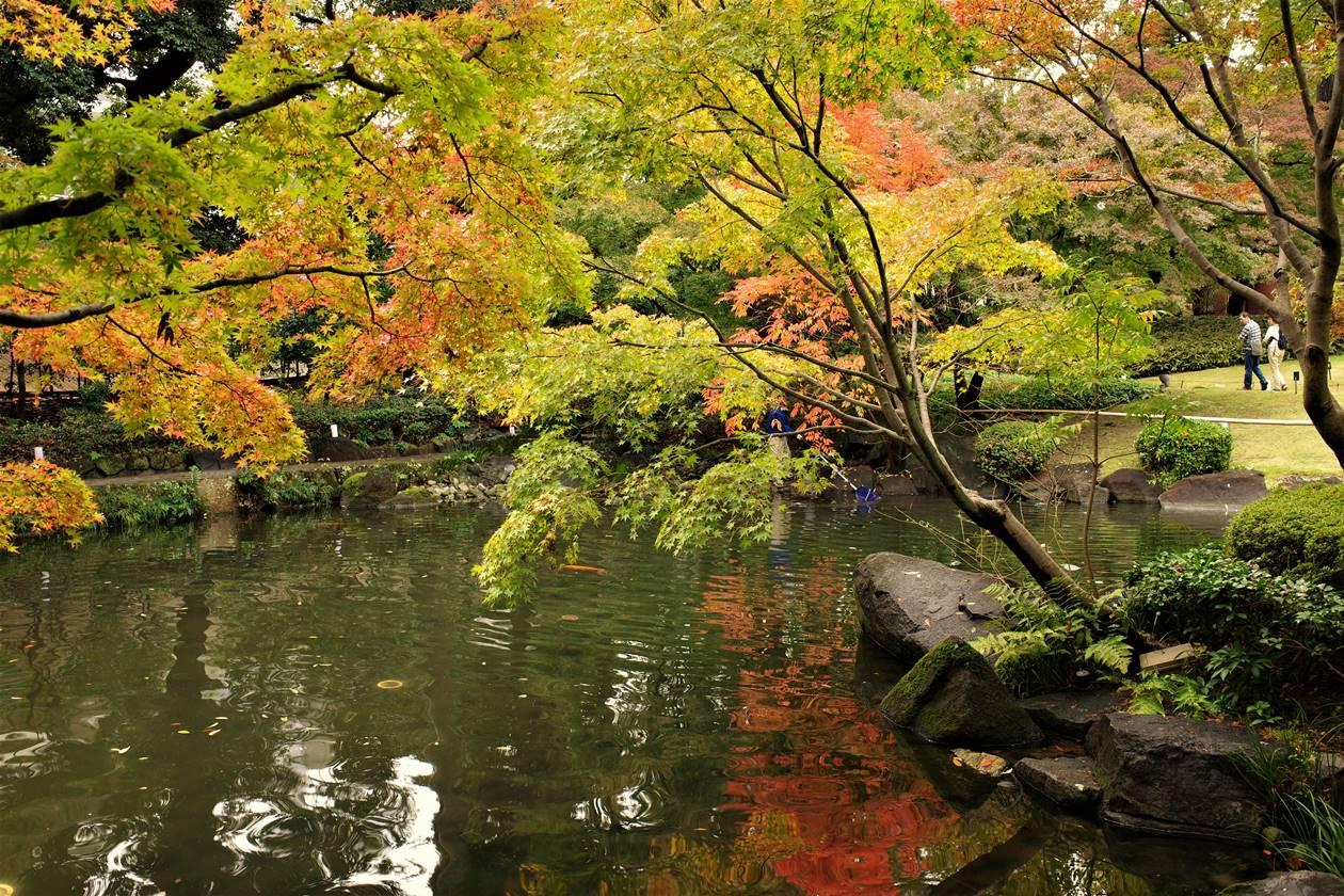 大田黒公園の池と紅葉