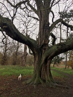 Big tree, little dog