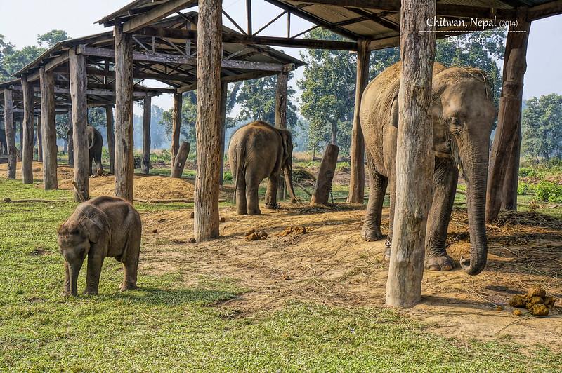 2014 Nepal Chitwan Elephant Breeding Center 3
