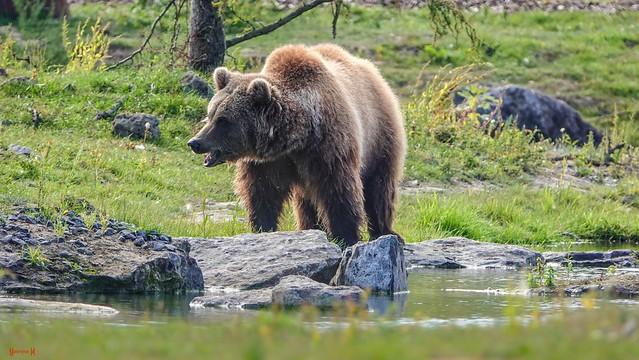 #Bear - 7753