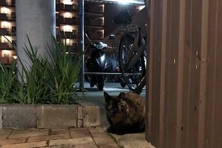 Today's Cat@2019-11-24