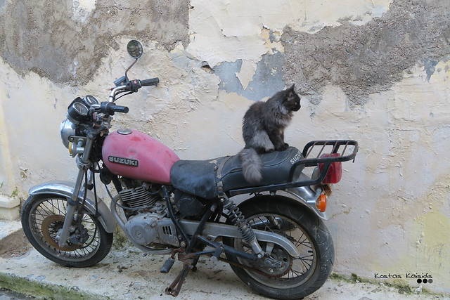 Easy rider, wrong direction...