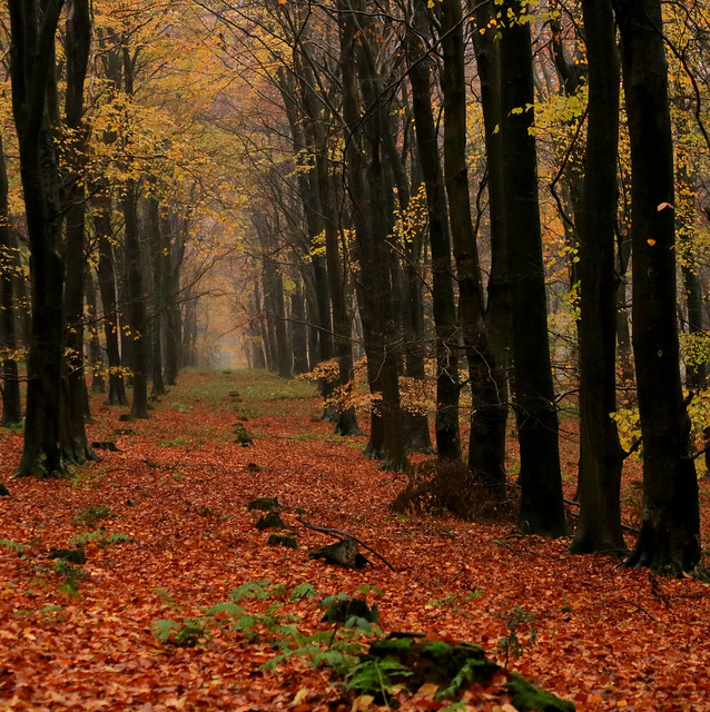 Selhurst Park Woodland Walk