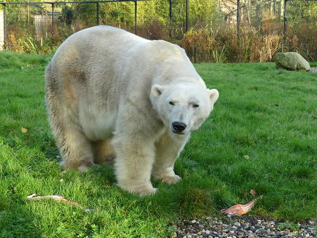 Eisbär Felix, AquaZoo