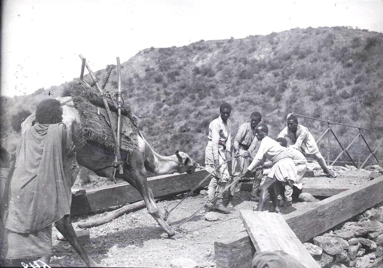 648. Перетаскивание верблюдов через мост (река Афаш)
