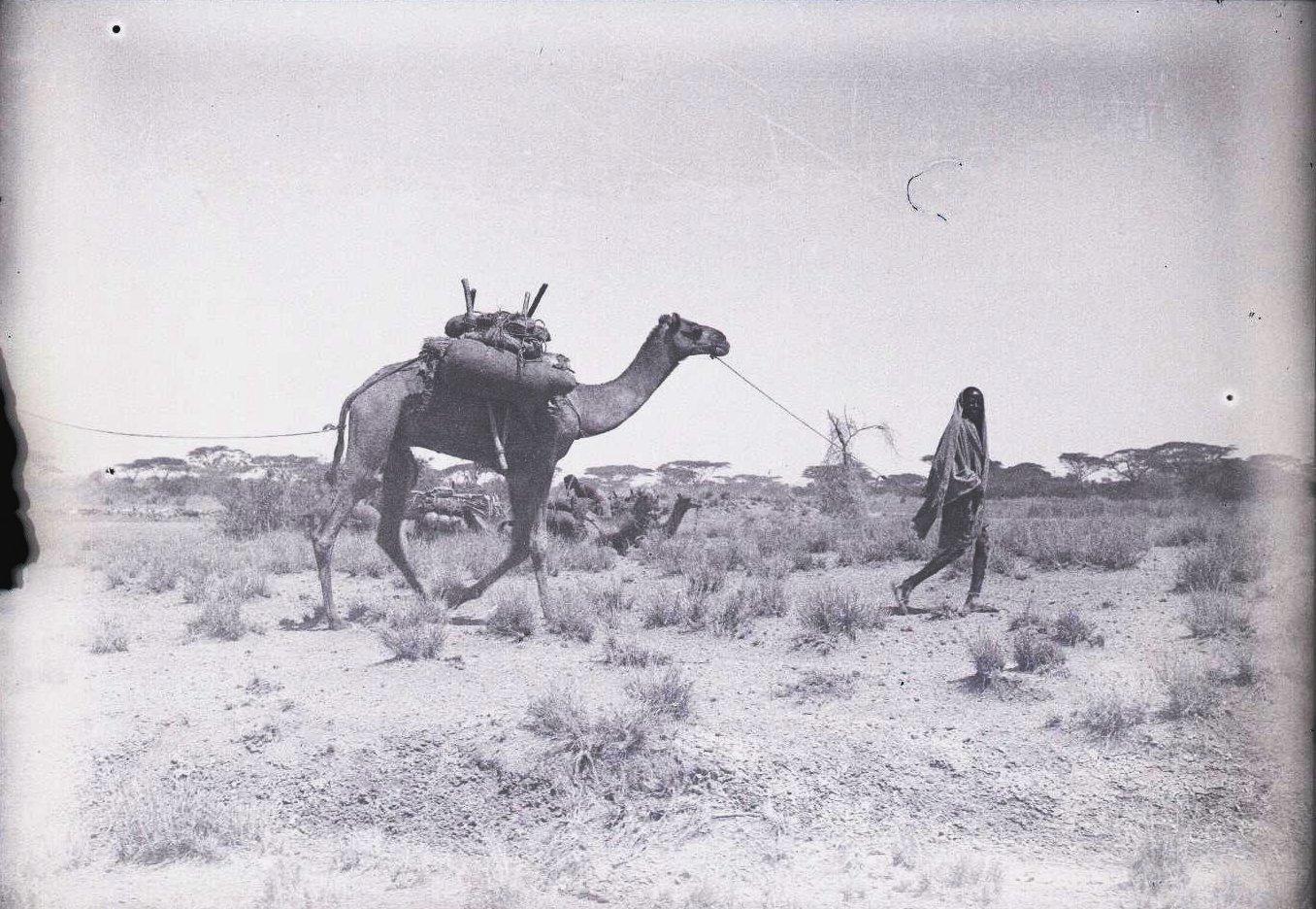 664. Данакильская пустыня. Мулю  водопой