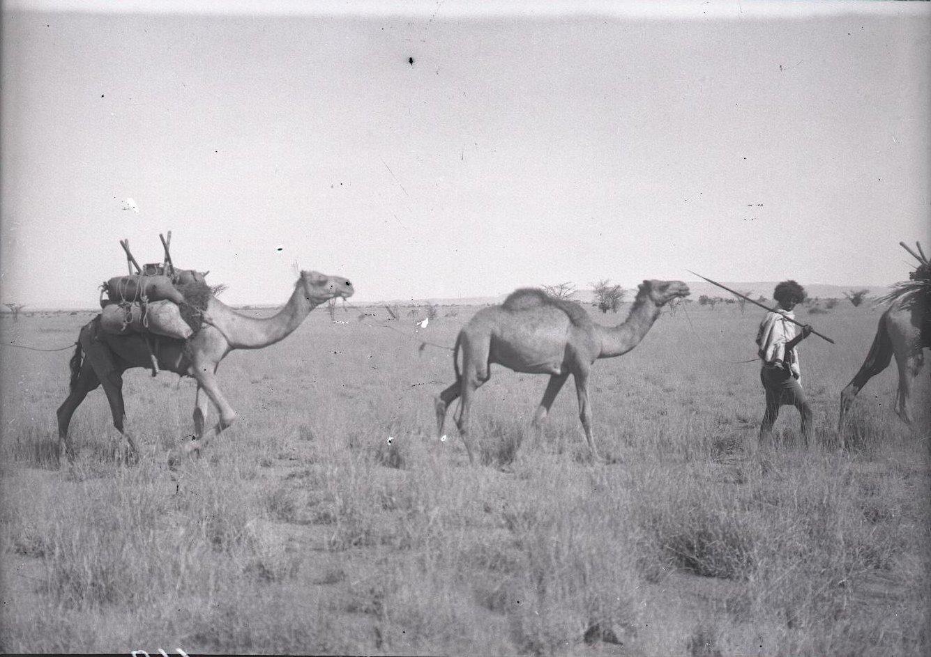 662. Данакильская пустыня. Караван верюлюдов