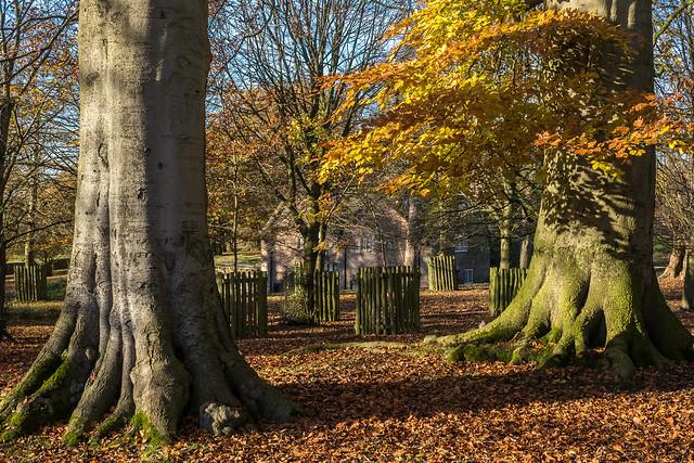Autumn at Dunham