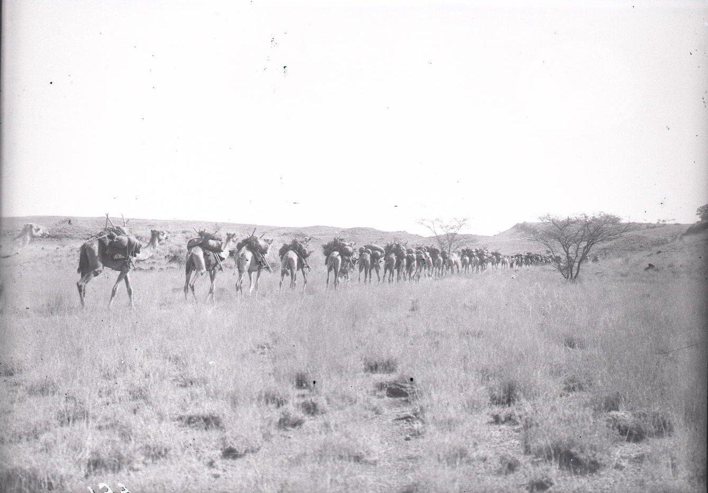 661. Данакильская пустыня. Караван верюлюдов
