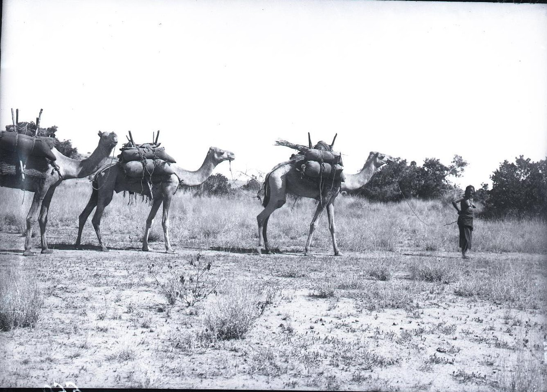 660. Данакильская пустыня. Караван верюлюдов