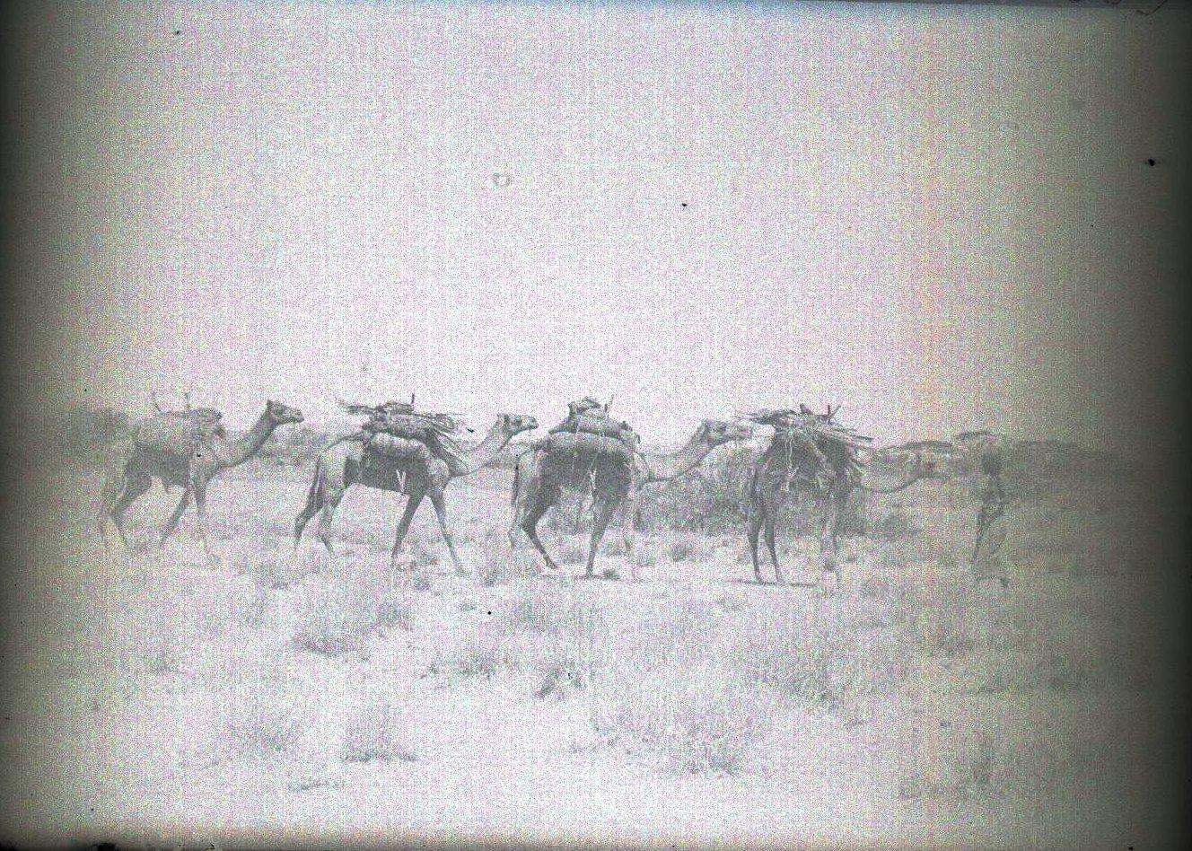 659. Данакильская пустыня. Караван верюлюдов