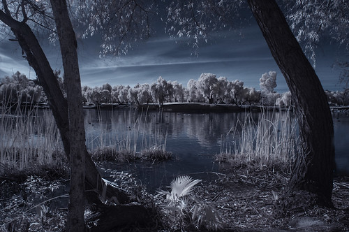 view lindolake lakeside infrared infraredphotography convertedinfraredcamera ir composition channelswapping clouds reflections trees nature surreal