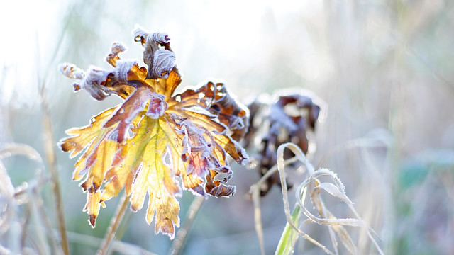 Frostiger Herbstmorgen