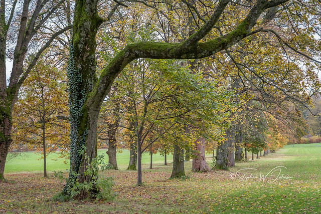 SJ2_3051 - The Avenue at Towneley Hall