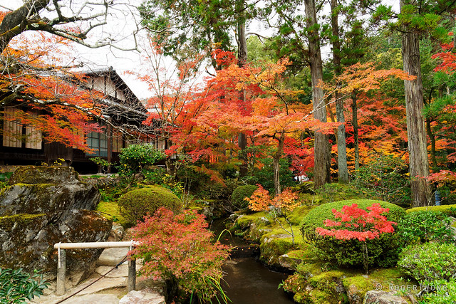 20191124-133-Autumn leaves at Tenju-an Temple