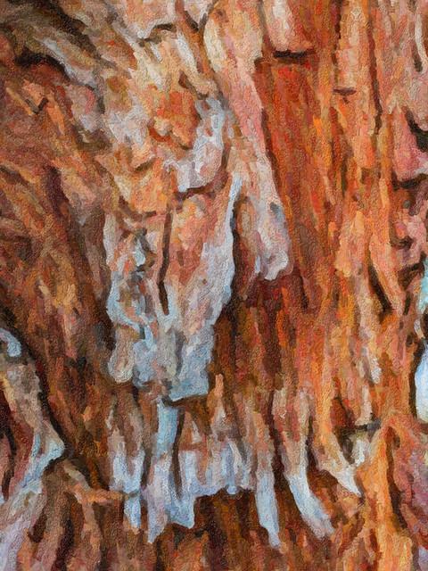 Bark Art Snapped