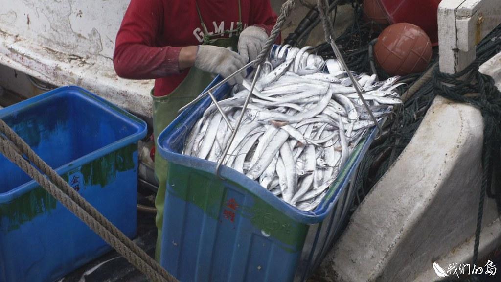 這批魚貨大部分都要循小三通模式,先送到金門再送到廈門。