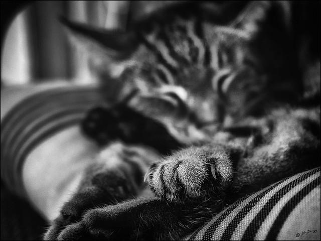Ne croyez pas que je dors...! / Don't believe that I am sleeping...!