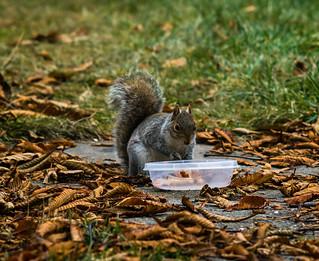 _Grabbing peanuts
