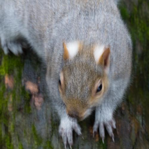 Dashing squirrels, West Park