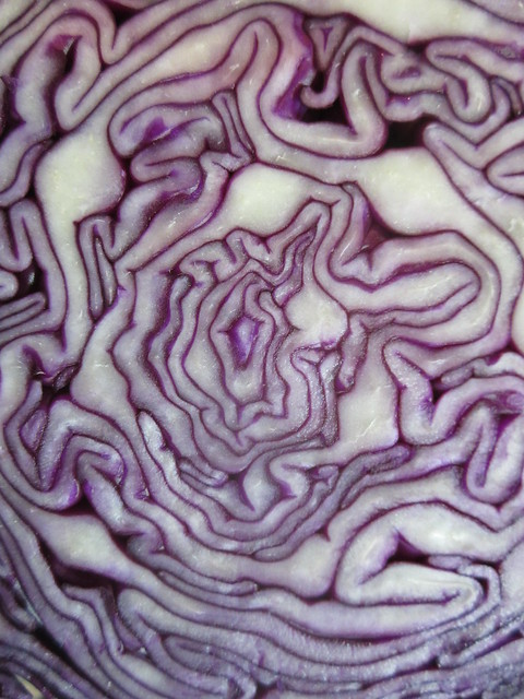 Abstract cut cabbage ( Explore )