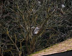 _Up a tree with a peanut