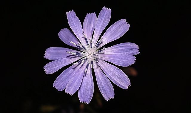 Plant (Macro)