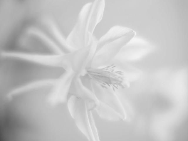 Phantom flora