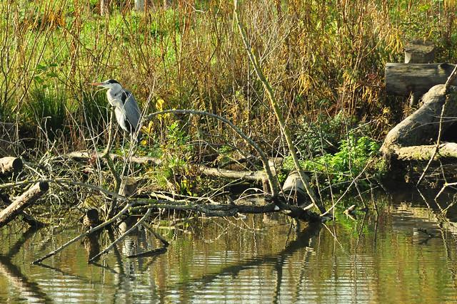 Ein sonniger November-Nachmittag bei der Fischkinderstube am Neckar zwischen Edingen und Neckarhausen ... Foto: Brigitte Stolle