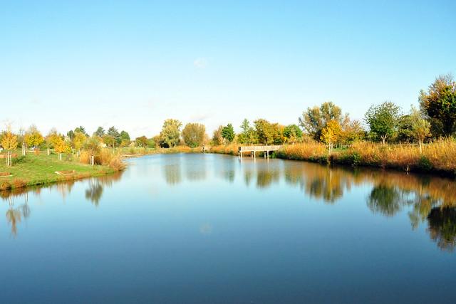 Ein sonniger November-Nachmittag bei Fischkinderstube am Neckar zwischen Edingen und Neckarhausen ... Foto: Brigitte Stolle