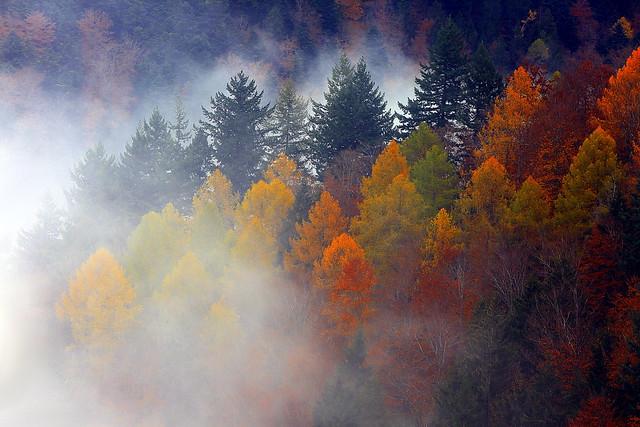 Bunt Gemischter Forst