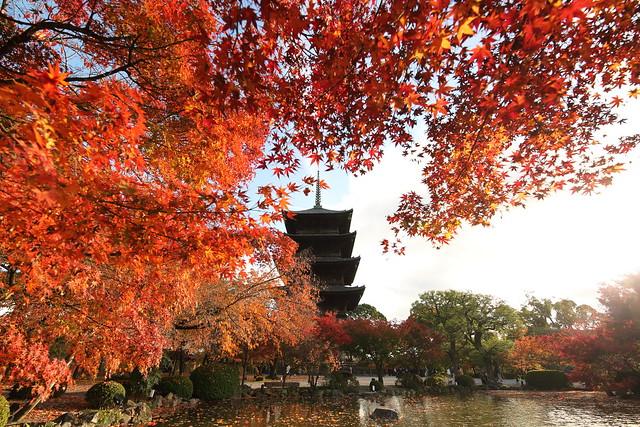 Autumn trees and pagoda