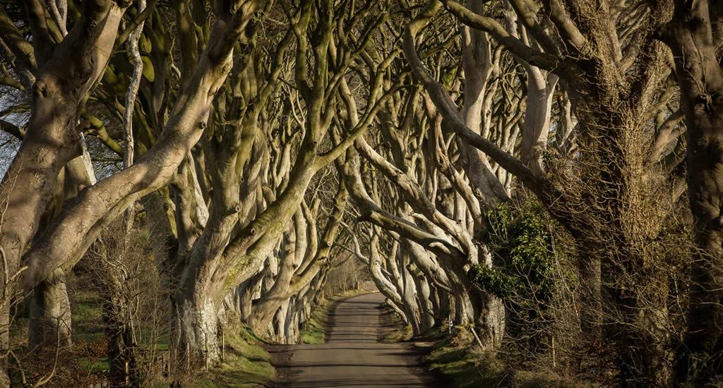 Game of Thrones Noord-Ierland, Dark Hedges | Mooistestedentrips.nl