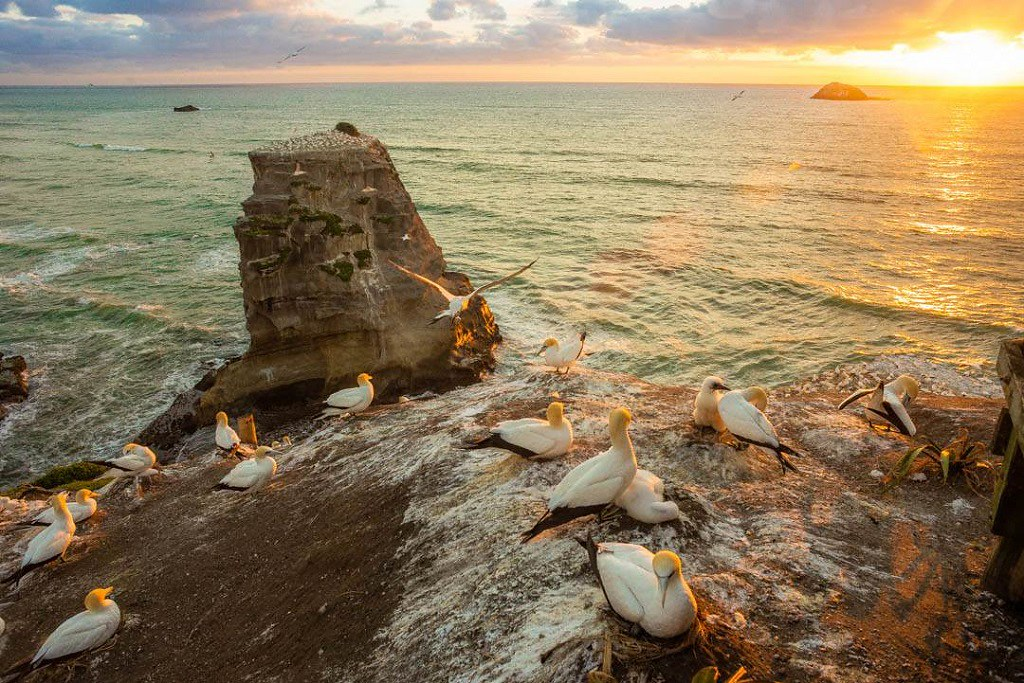 A rock raising from the sea, at sunset. The sky is yellow. Near the rock there is a seagull nest, with tens of seagulls around