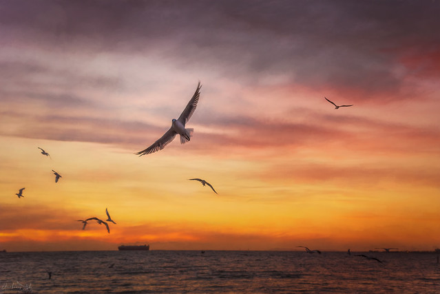 Free bird DSC_3995
