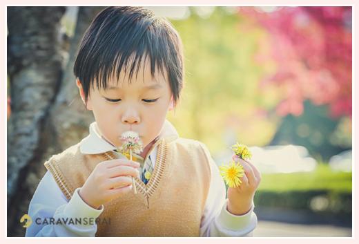 タンポポの種を吹いて飛ばす男の子 秋の公園